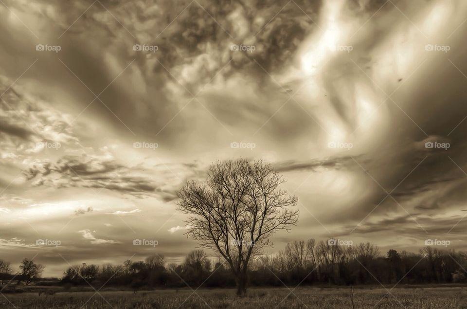 Drama Tree