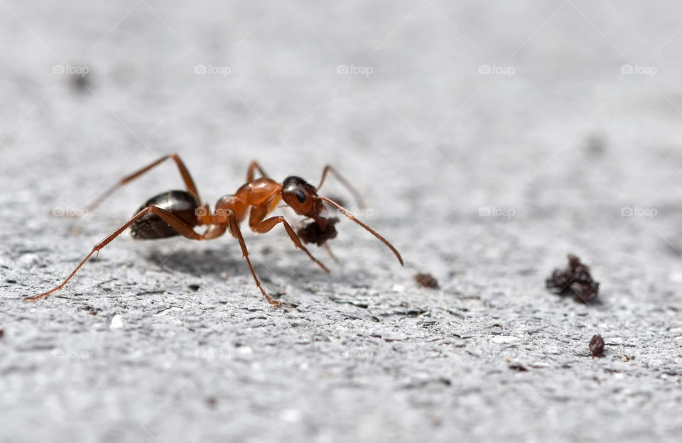 Close-up of ant carrying food in mouth