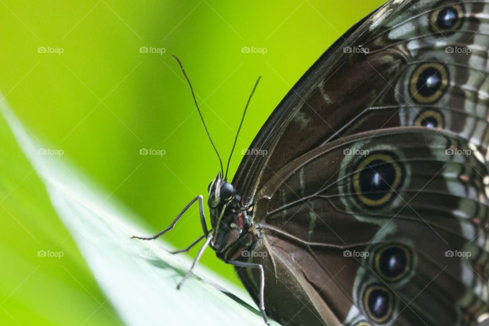 Brown butterfly close-up