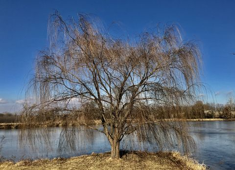 Winter Story, cold, winter, rural, frozen, ice, lake, sky, shore, thin ice, pond, water, melting, trees, tree line, melting, open water, willow, weeping willow, tree, point