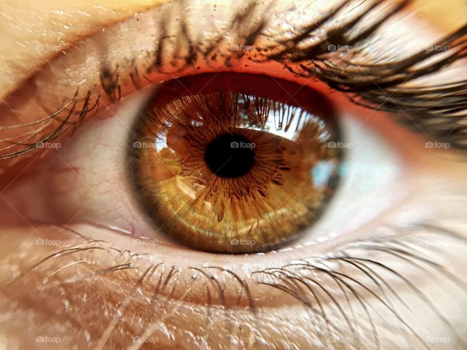 Extreme close-up of brown eyes