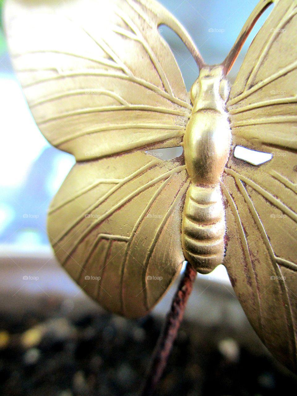 Golden metallic butterfly