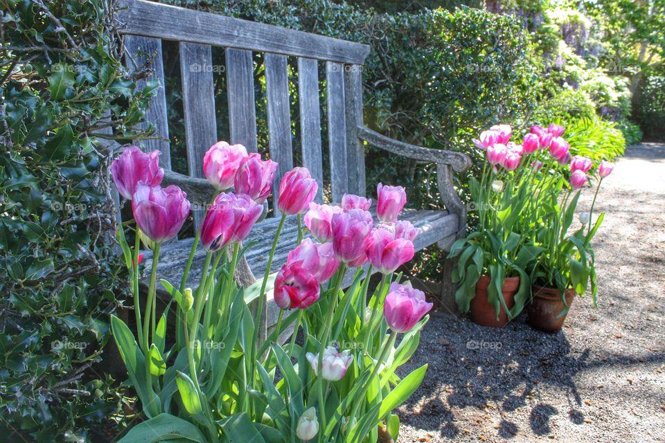 Sitting pretty in Spring
