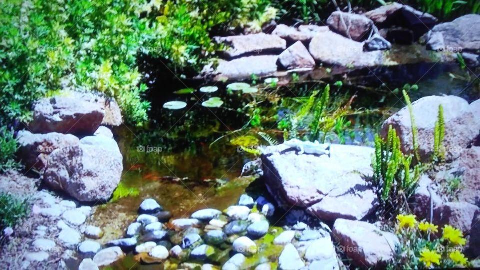 Water, Stream, Nature, Rock, Stone
