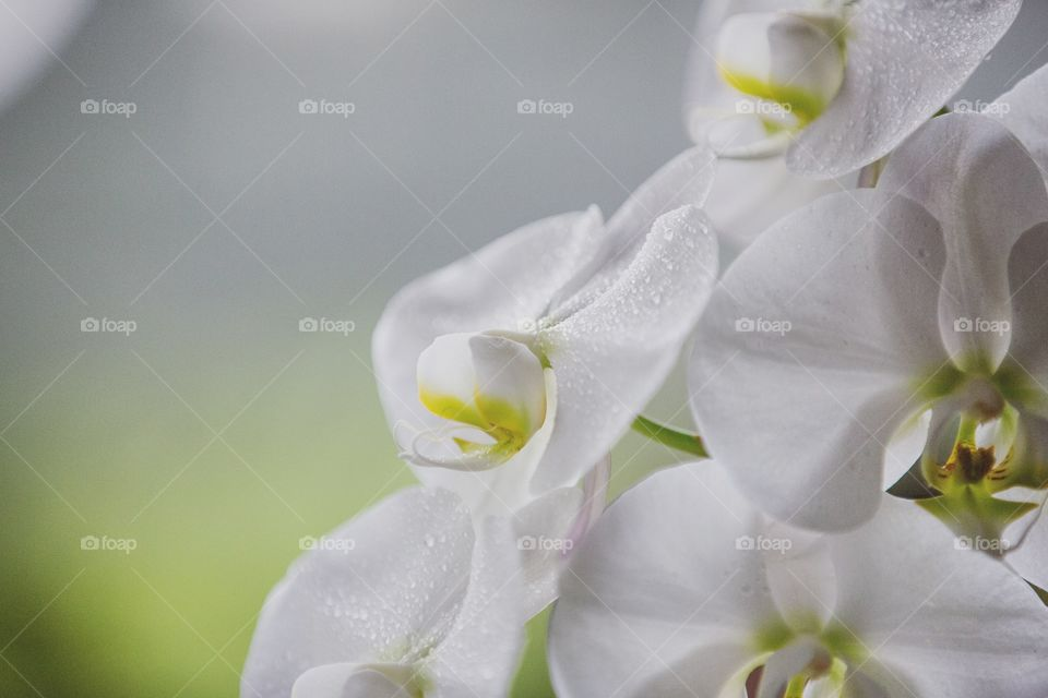 Close-up of a gorgeous orchid flowers blooming
