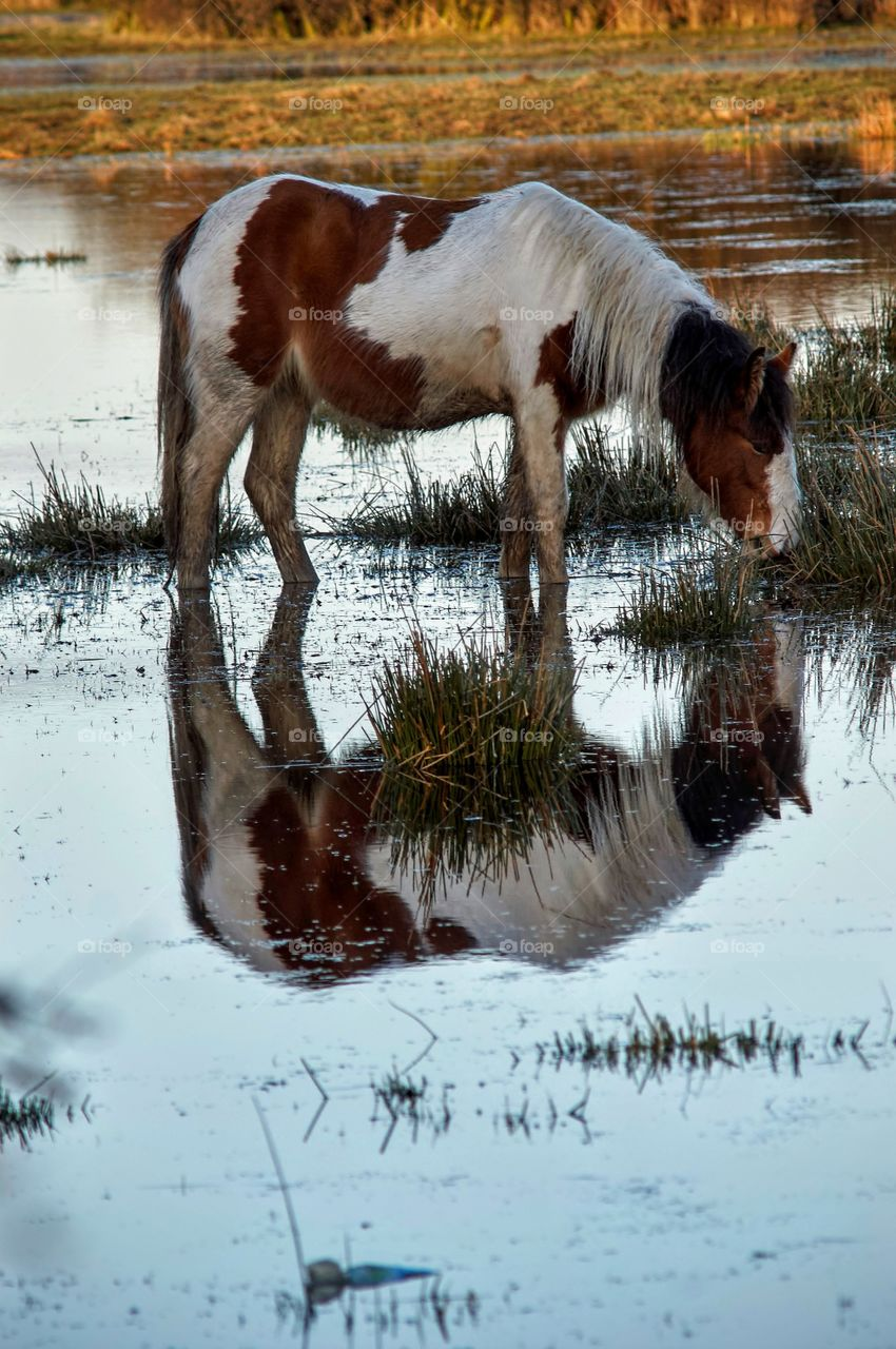 Horse reflecting in lake