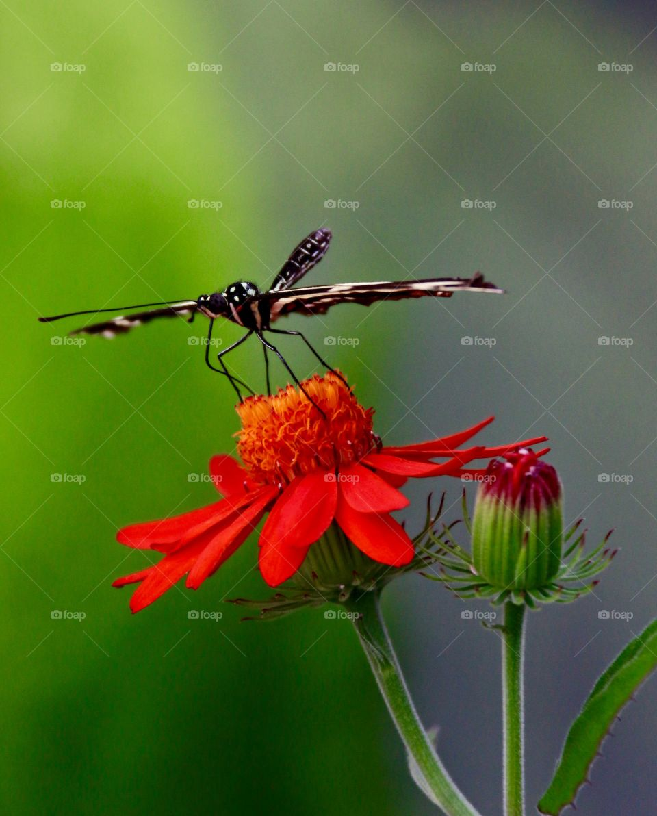 Sleek butterfly on large red tropical flower