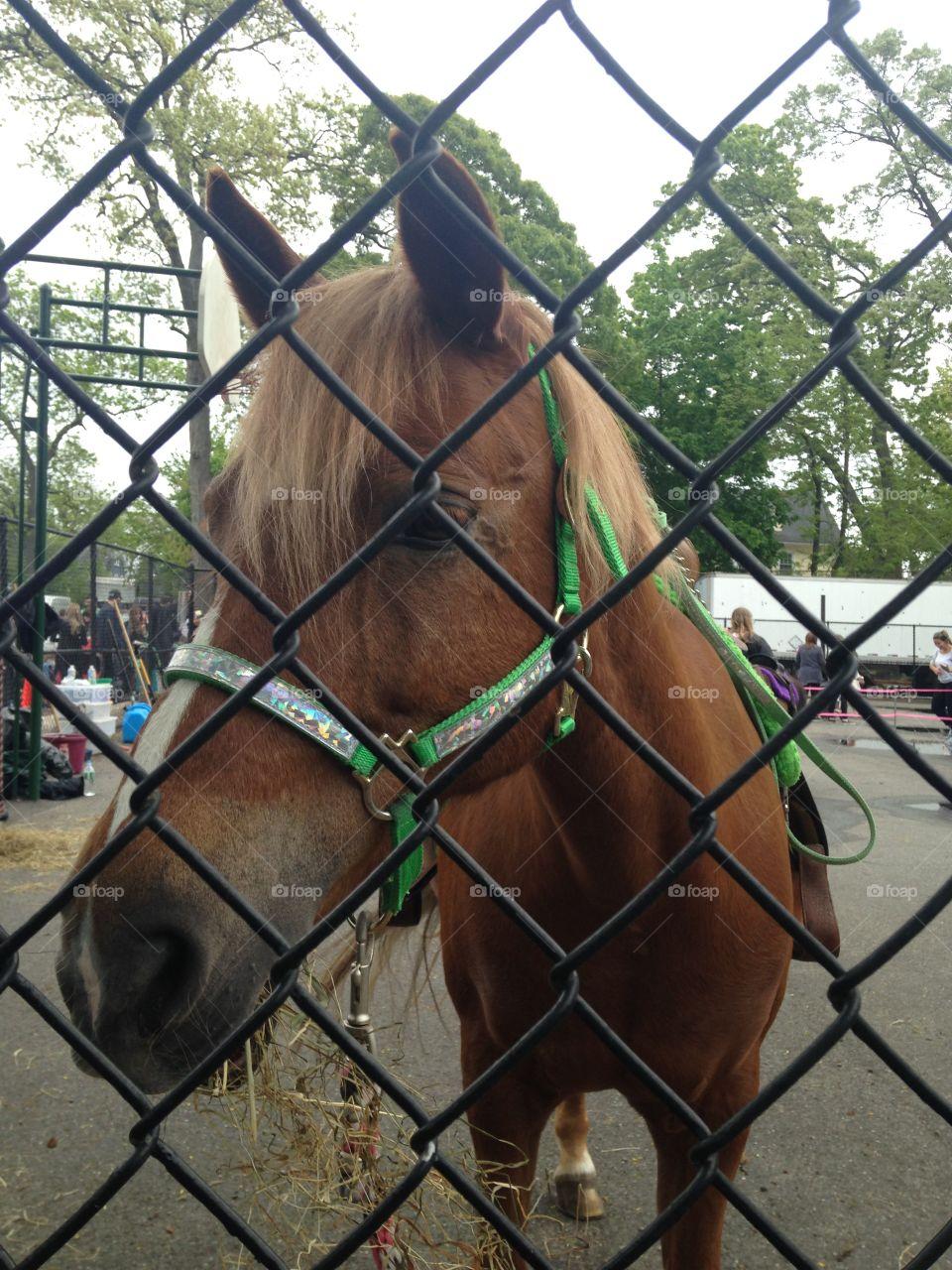 Happy horse friend