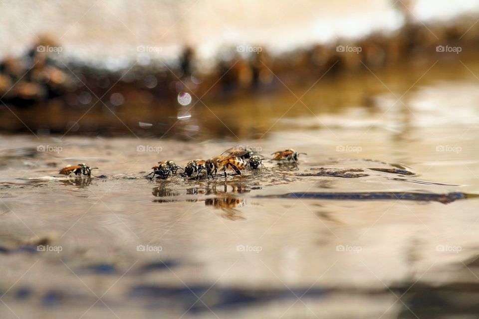Reflection of honey bees in water