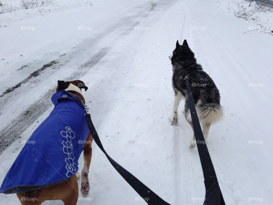 Walking in the snow with my buddies!