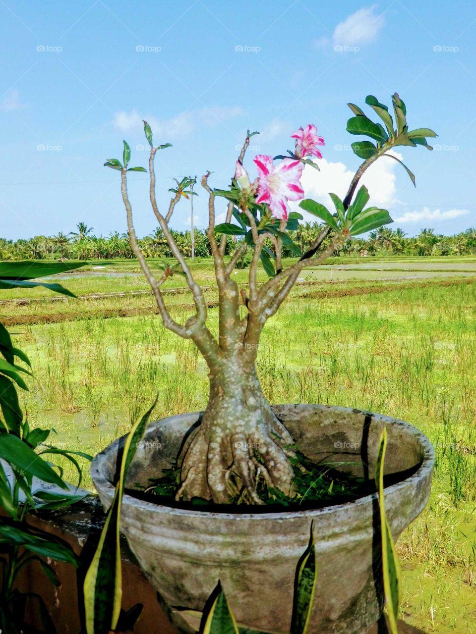 Beautiful flower vase in Bali