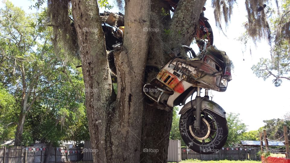 Riding Through the Trees