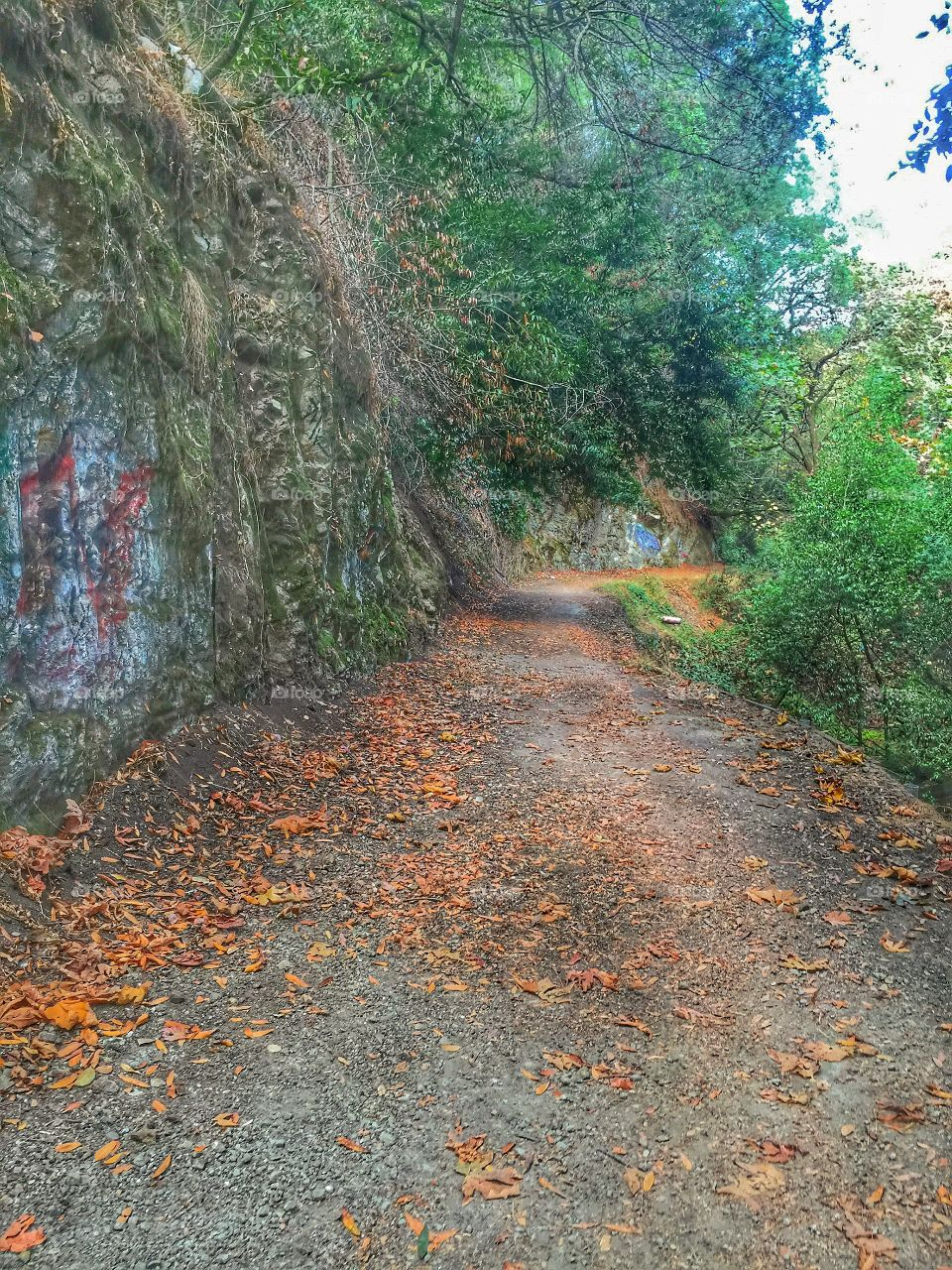 Scenic view of footpath in forest during autumn