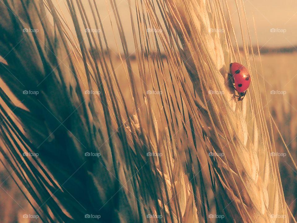 Ladybug 🐞
