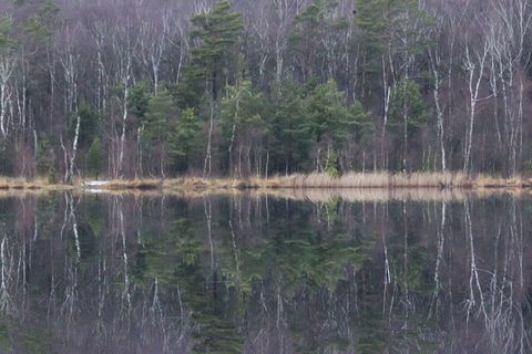 Forest reflections in the ice - by the lake