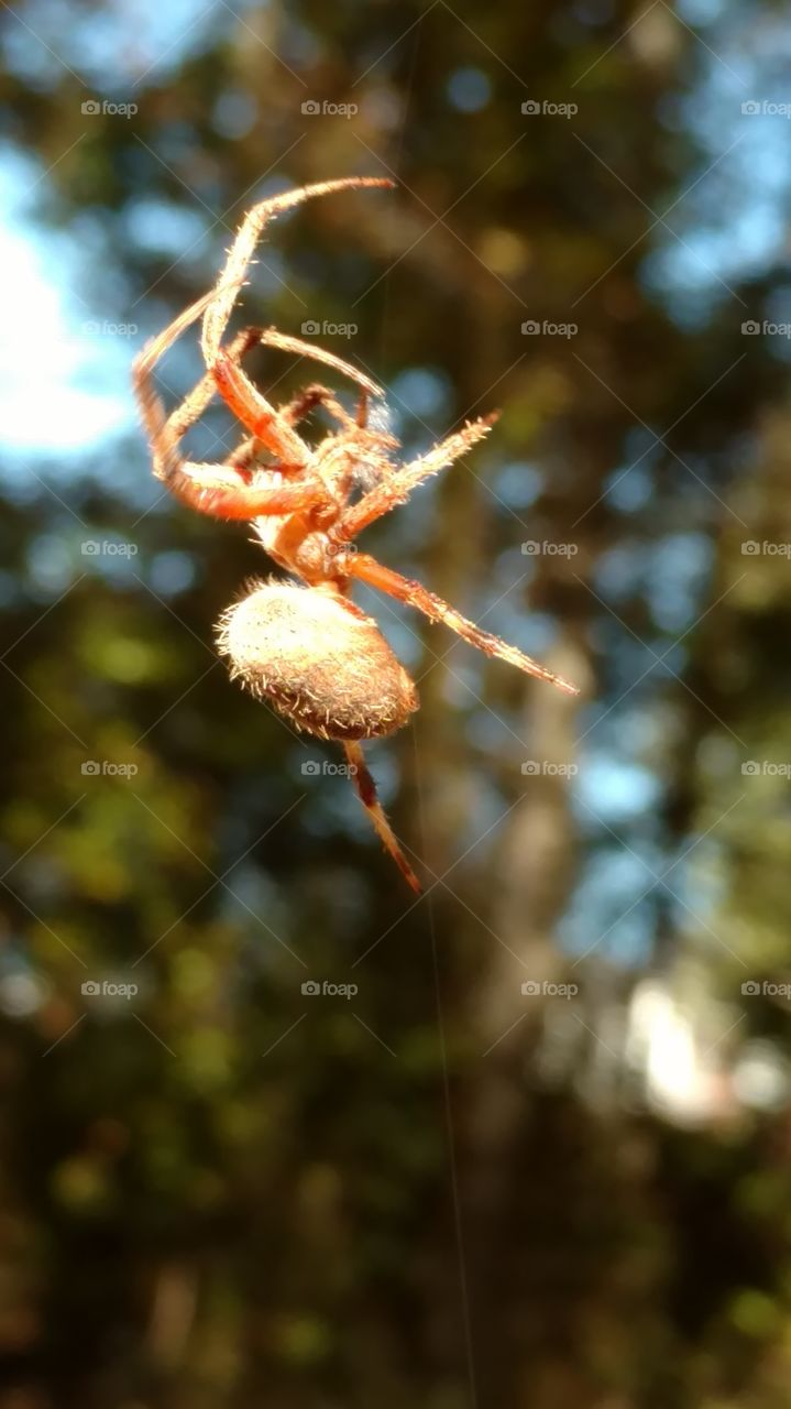 Nature, Spider, Tree, Insect, Outdoors