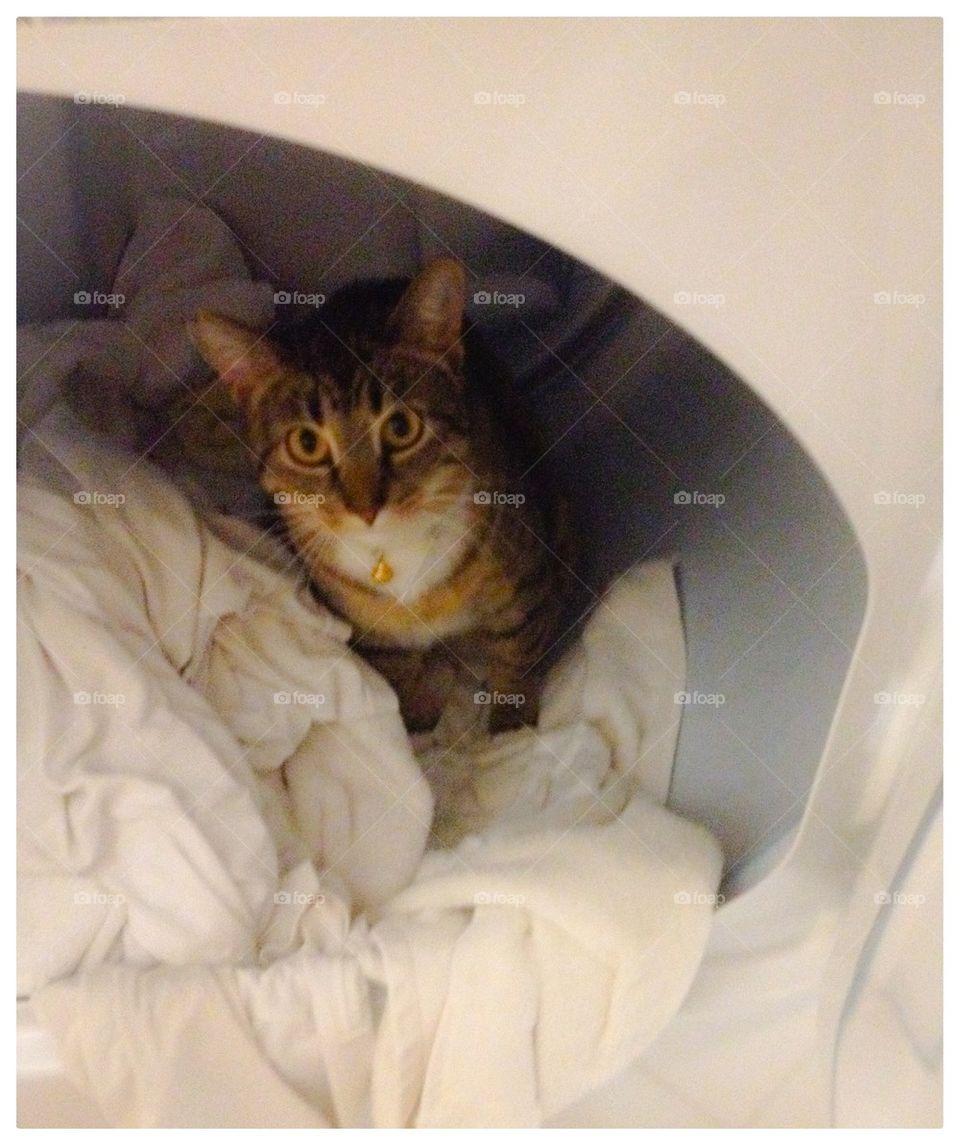 Cat in a Dryer