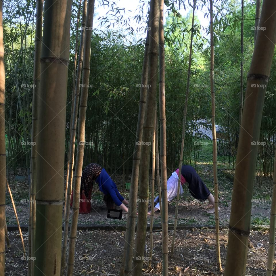 Bamboo Yoga Forest. Two women yoga
