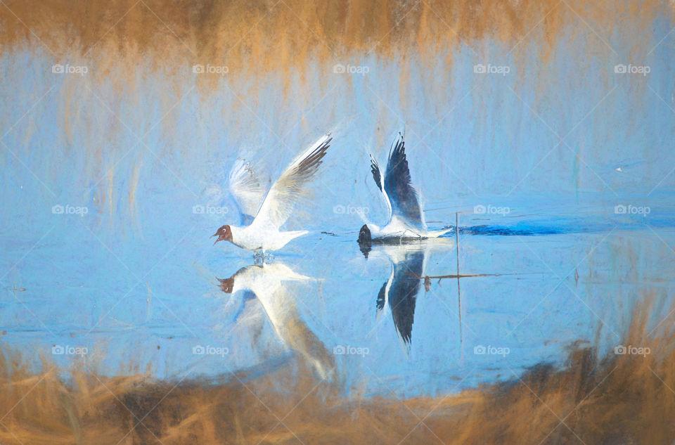 Seagull reflections digital art