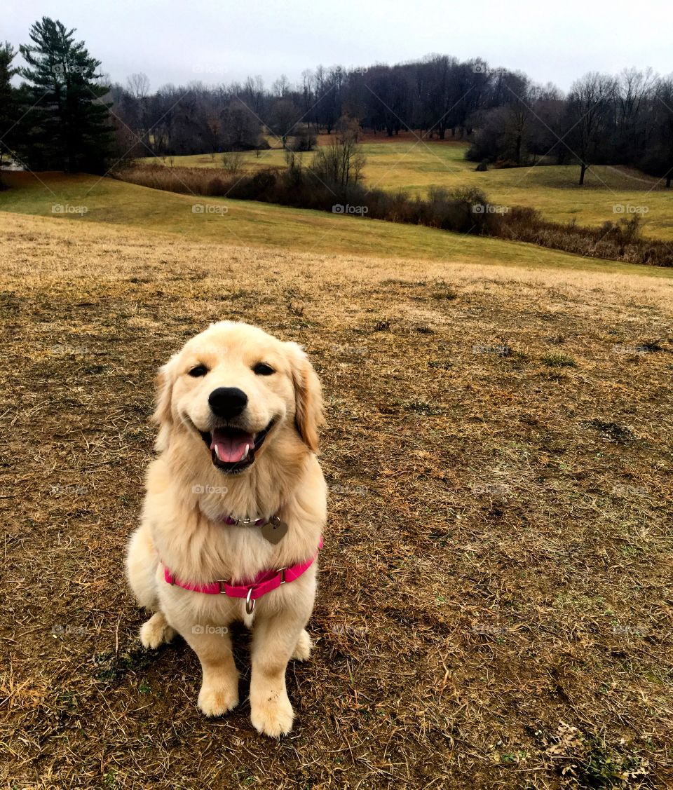 Lucy the Mini-Golden exploring Hines Park, Michigan