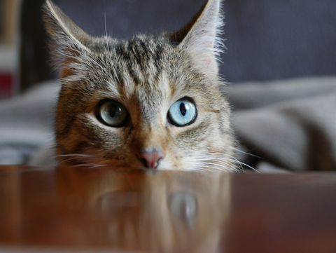 Cat looking on table