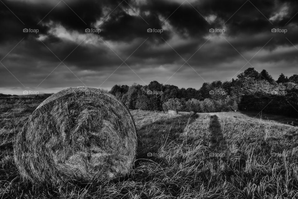 Silage on meadow with trees on background
