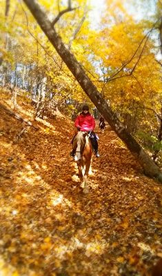 Fall Trail. A beautiful fall ride in Virginia