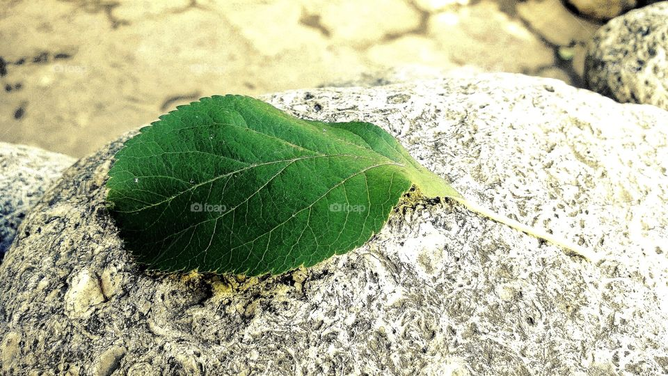 Green leaf on stone