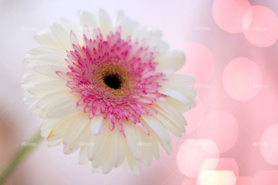 The flower on pink background