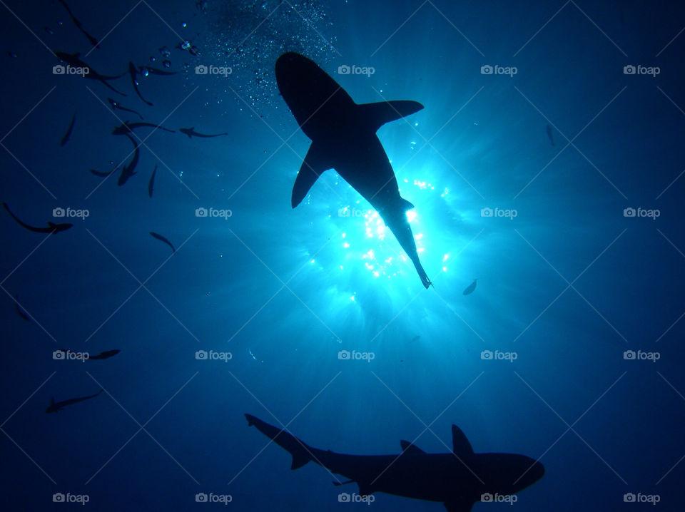 ocean blue sun fish by FrankTheDog