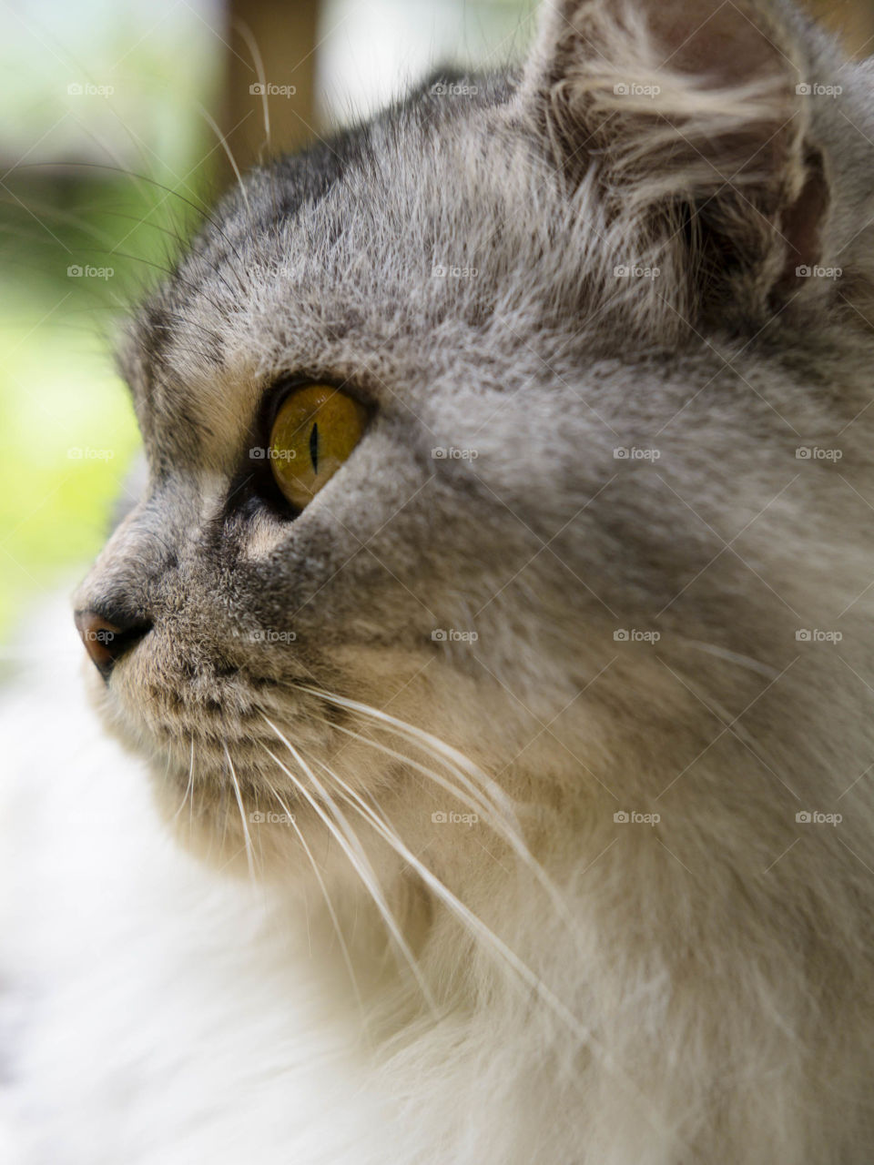 Extreme close-up of cat