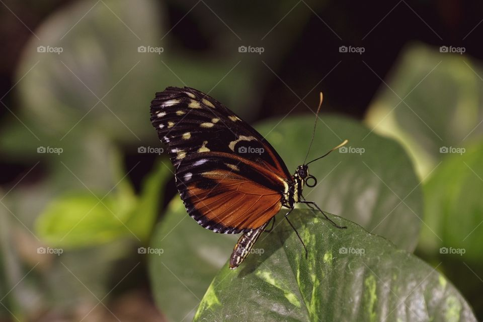 Butterfly Closeup Photography, Butterfly Landed On A Plant, Closeup Macro Insect Photography