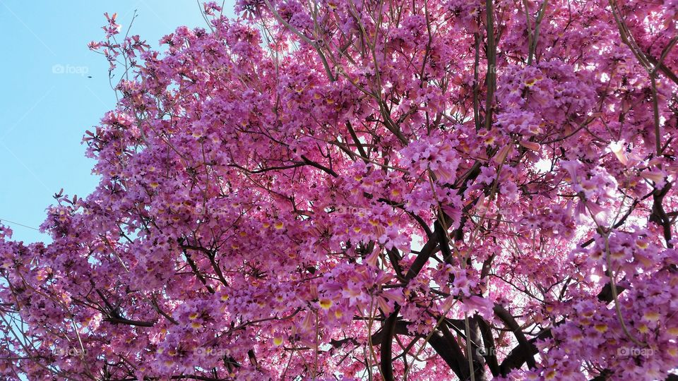Tree Blossoming in Pink!