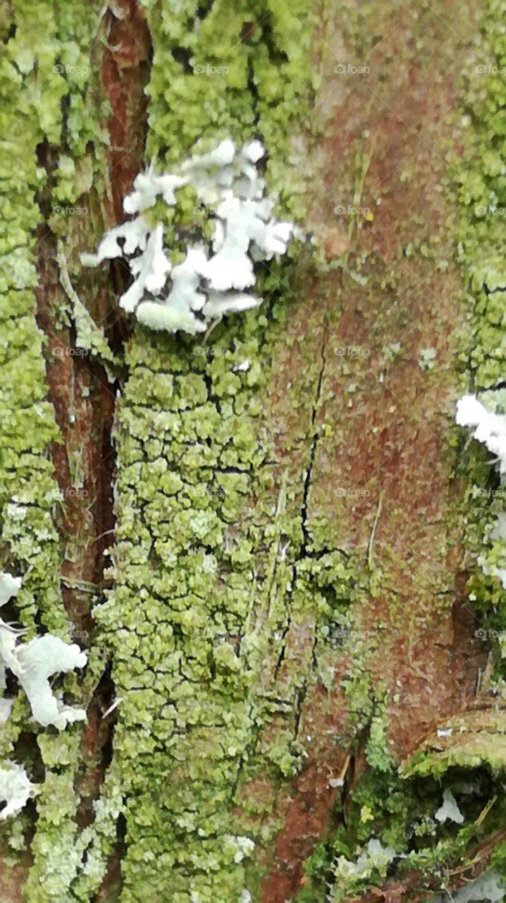 tree close up