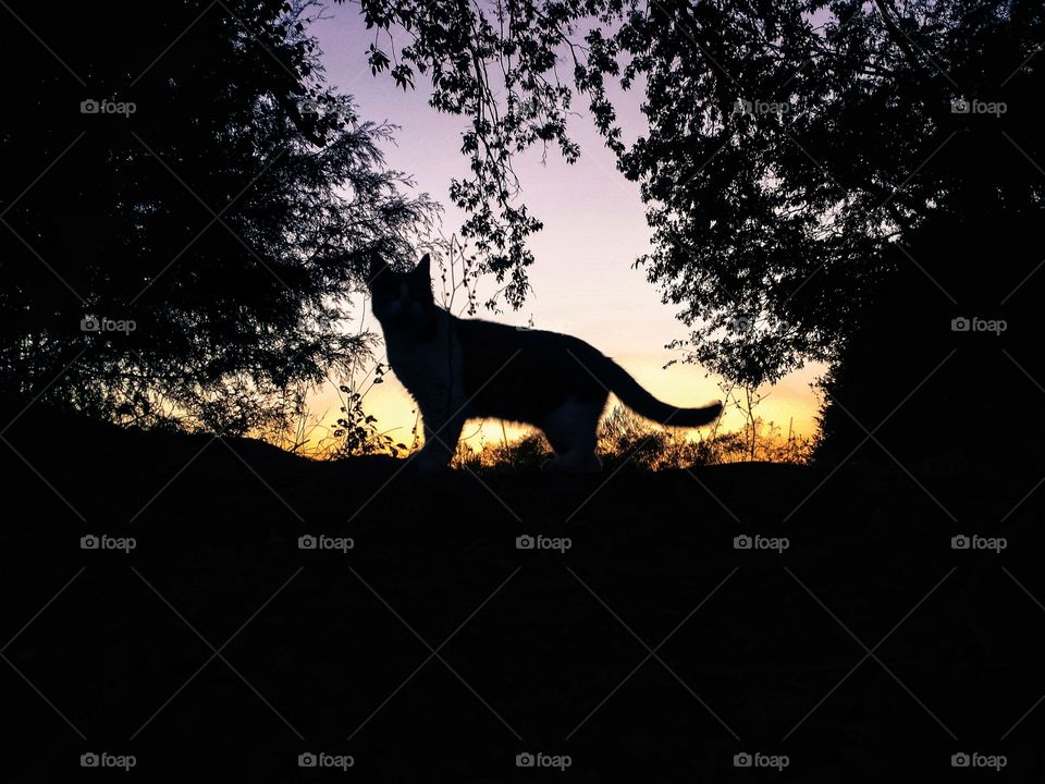 Silhouette of a tabby cat on a hill with an evening sky of purple and gold with trees