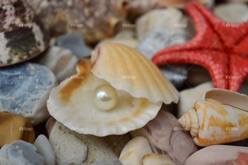 Pearl in shell with star fish