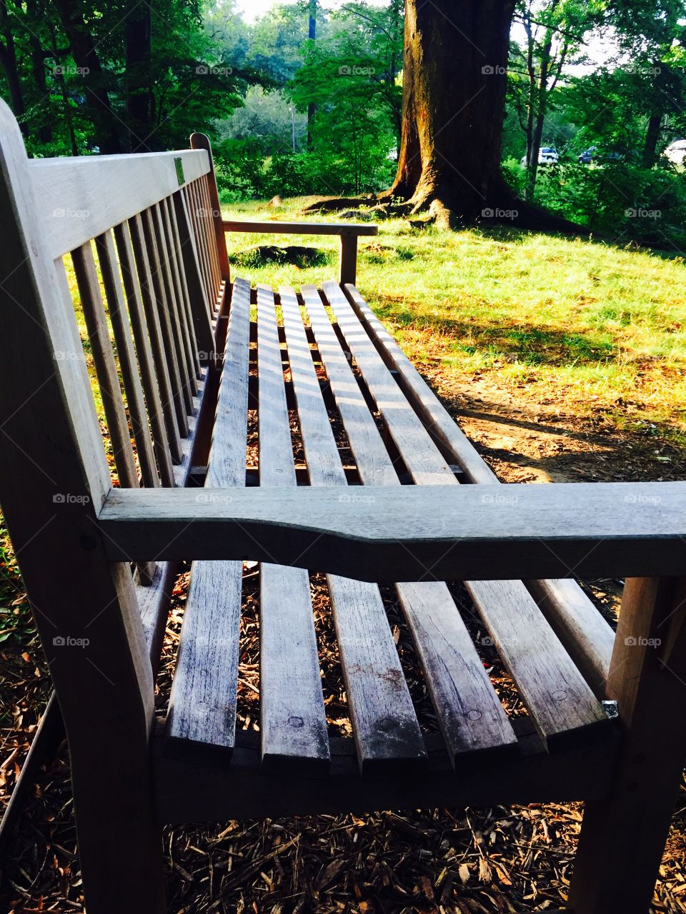 Seated here in contemplations lost, my thought discovers vaster space beyond, supernal silence and unfathomed peace.