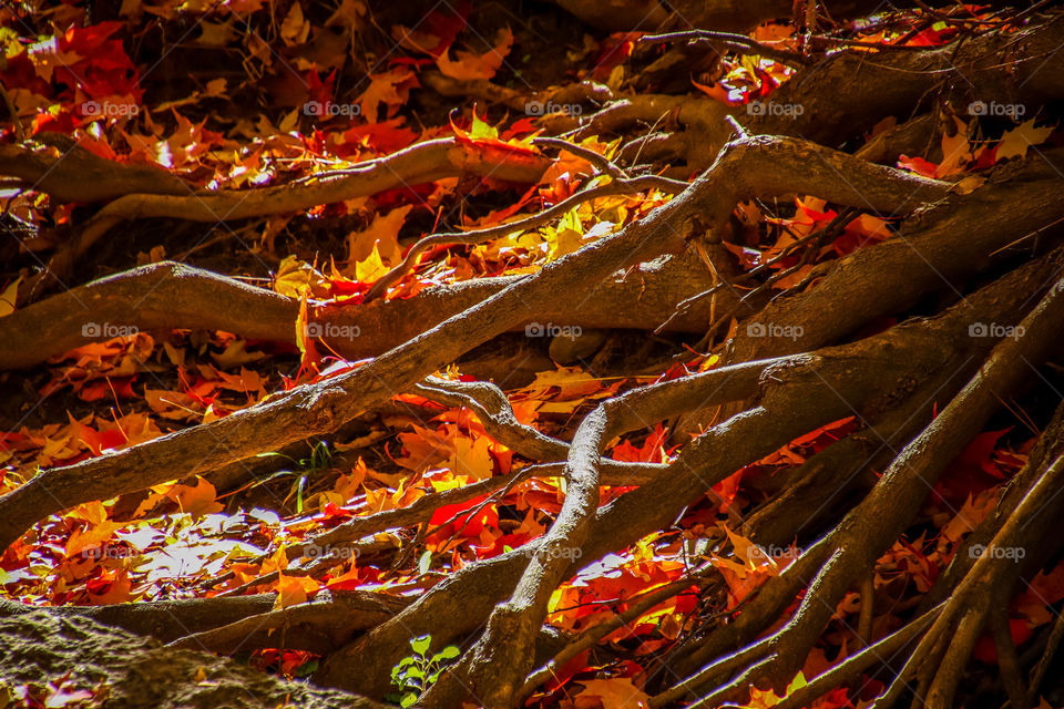 Flame of fallen autumn leaves