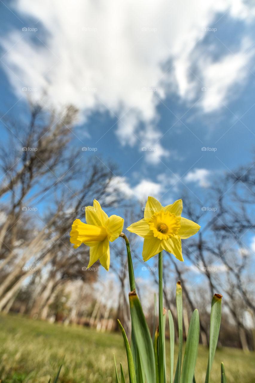 Nature, No Person, Flower, Flora, Field