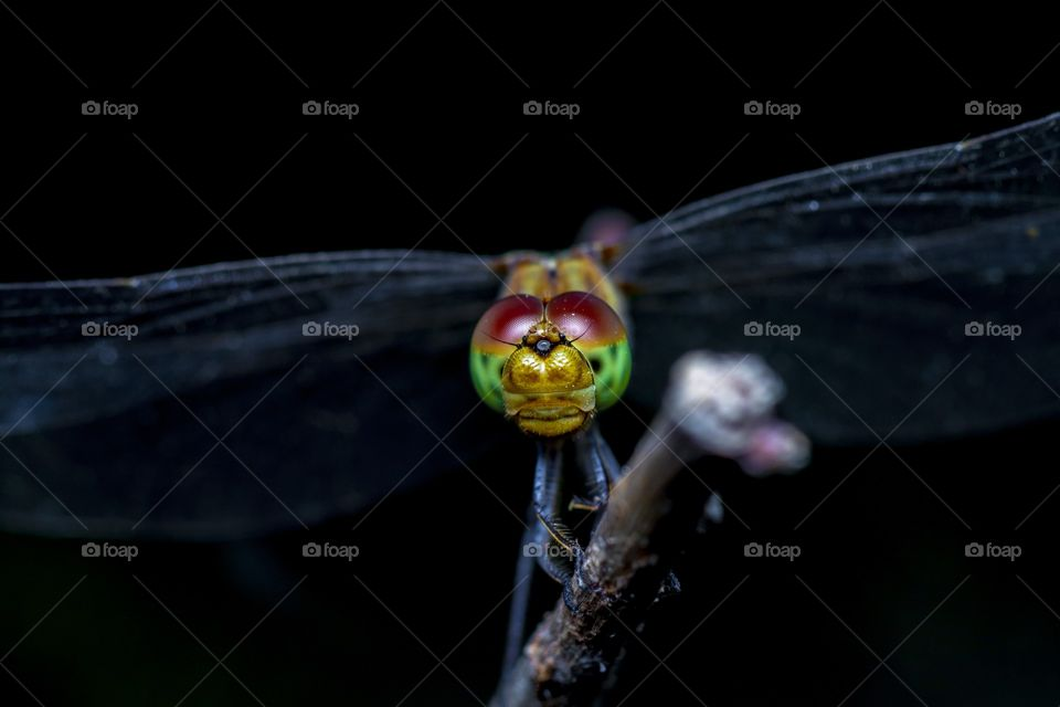 the colorful eyes of the dragonfly