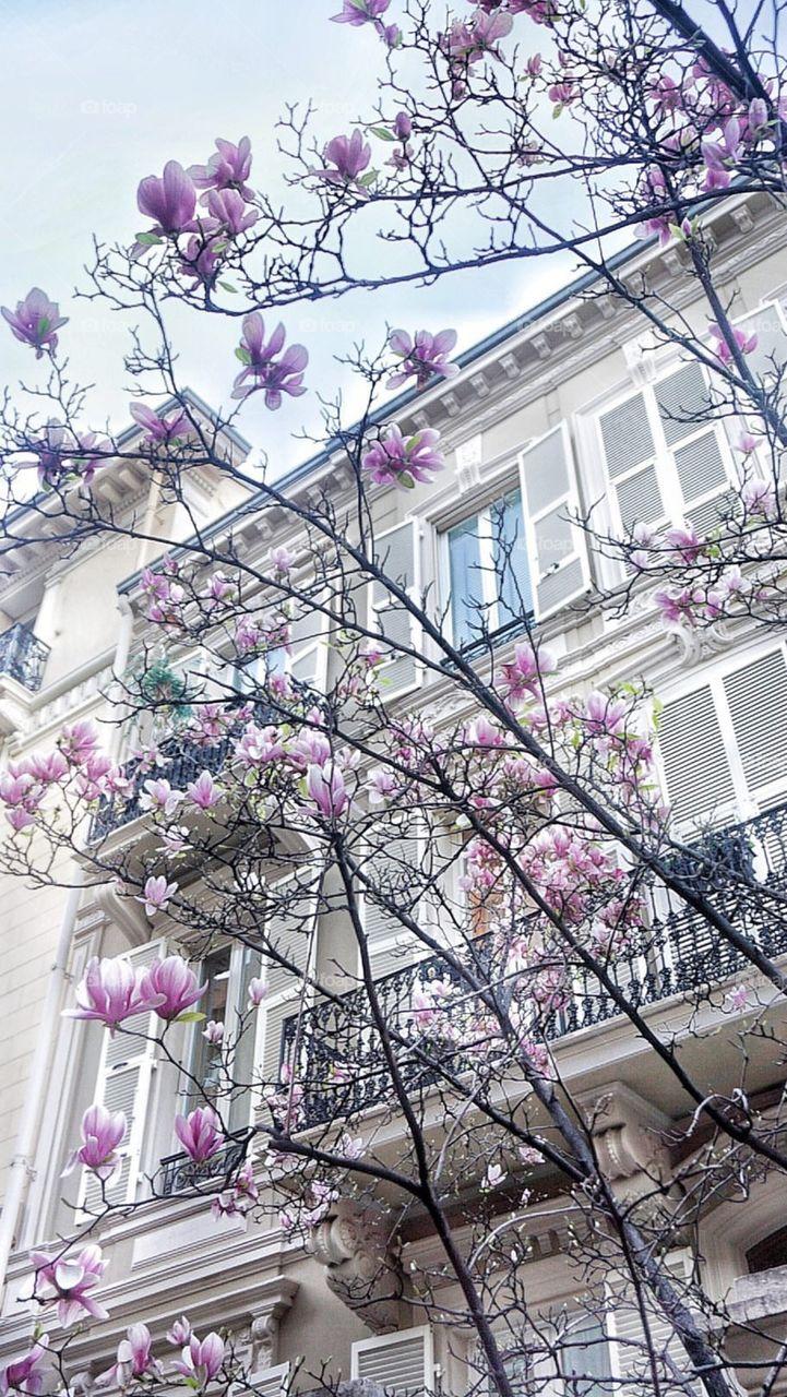 Flower, Flora, Tree, Branch, Garden