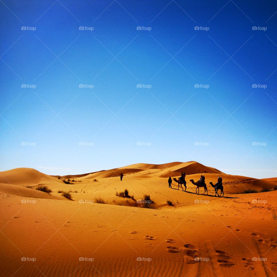 Silhouette of camels on Sahara desert