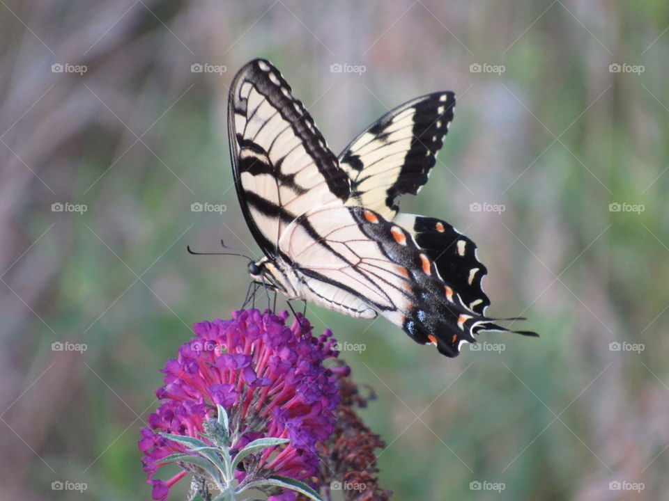 Nature, Butterfly, Insect, Outdoors, Wildlife