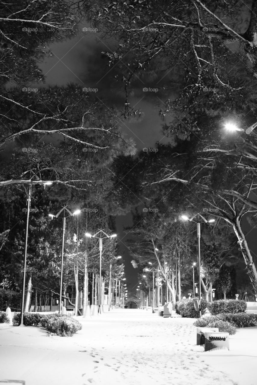Wide angle winter view park and black white