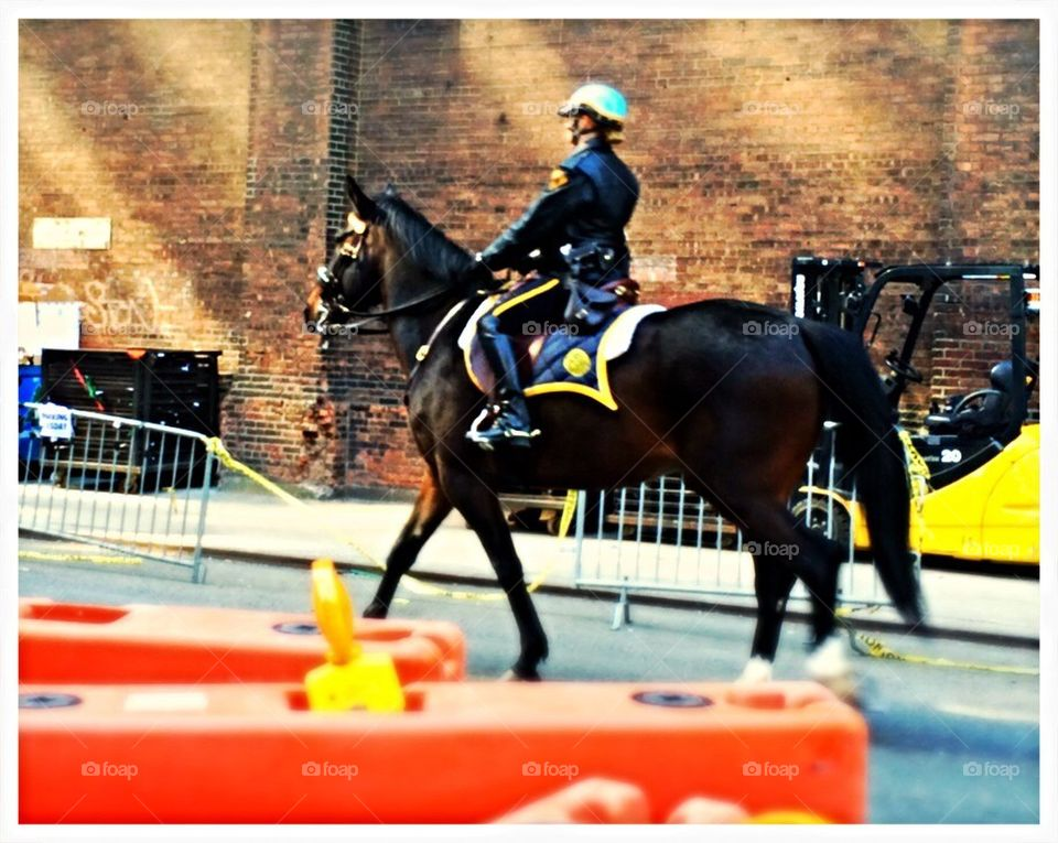 New York City NYPD police horse