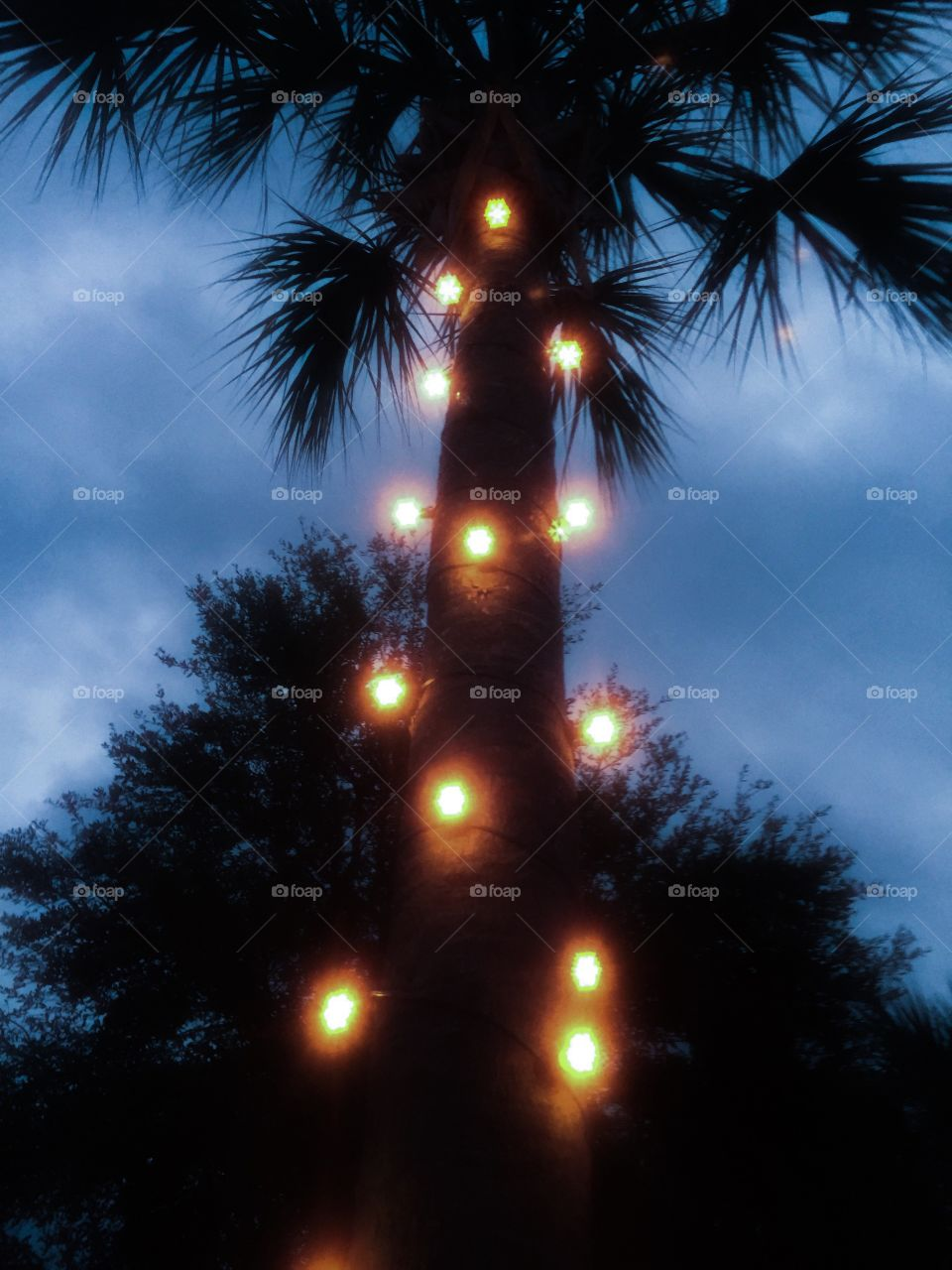 Tree illuminating with light