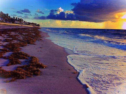 Seaweed and beach