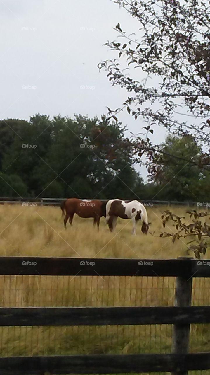 Summer Pets mejestic horses