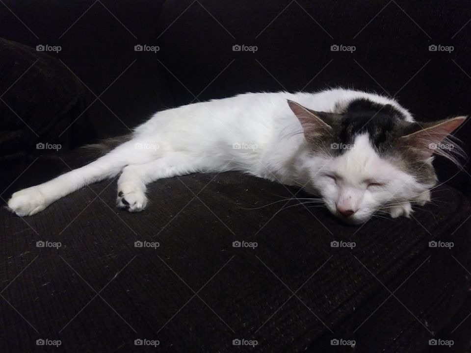 A white cat named Cloud sleeping on a couch
