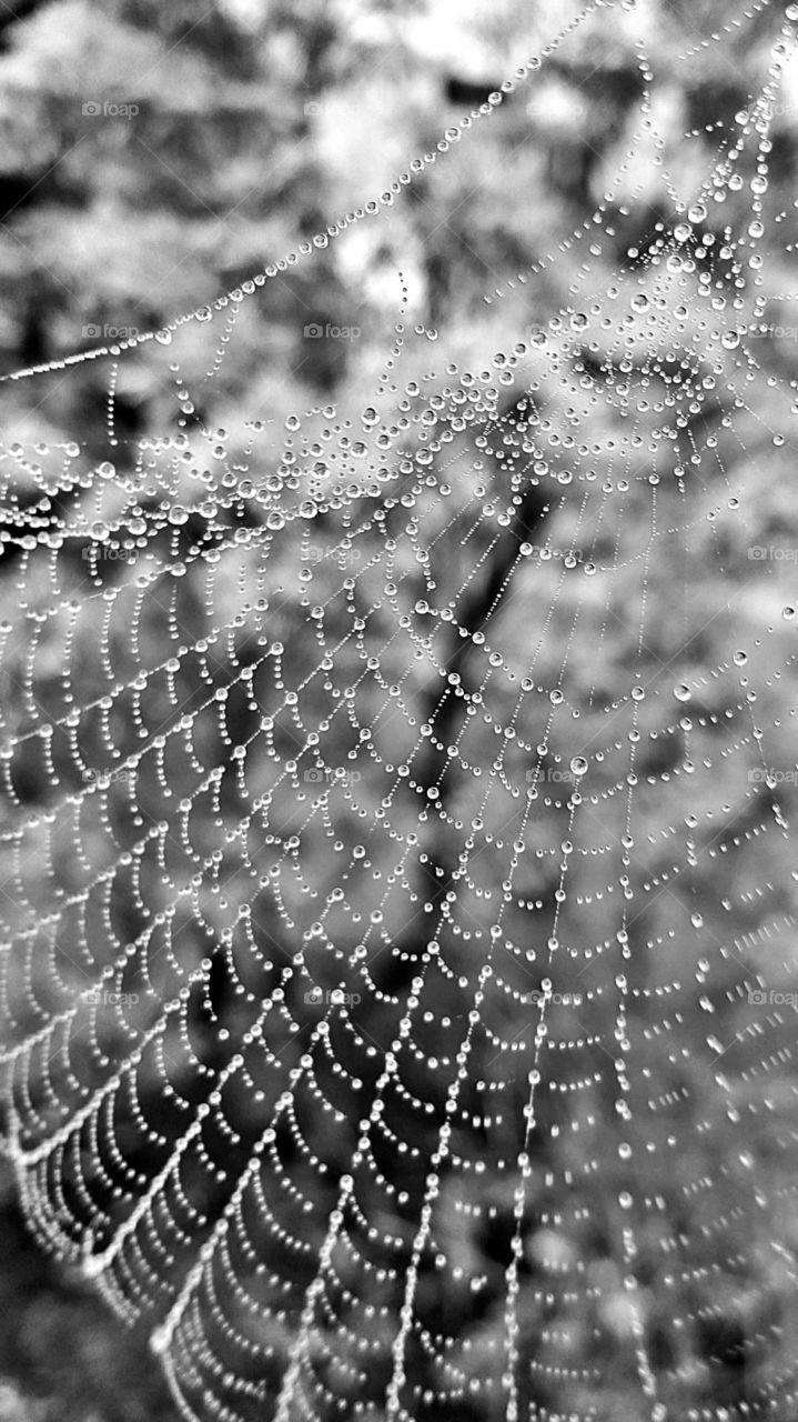 B & W spiderweb